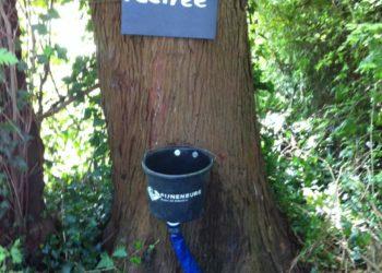 pee tree.jpg